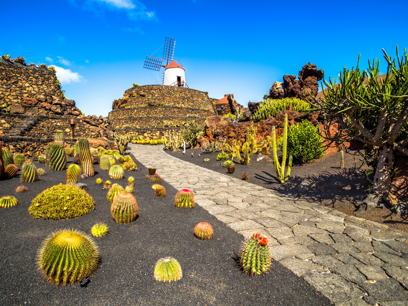 Lanzarote. The cactus garden.
