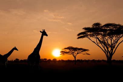 I World Travel Awards 2020 per L'Africa